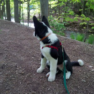 Puppy on trail next to river