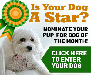 Is your dog or next Dog of the Month?  Click here to get started.