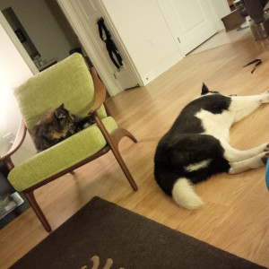 Dog and cat: stop the dog from chasing the cat
